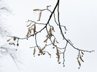 dale-bennett-branches-sky
